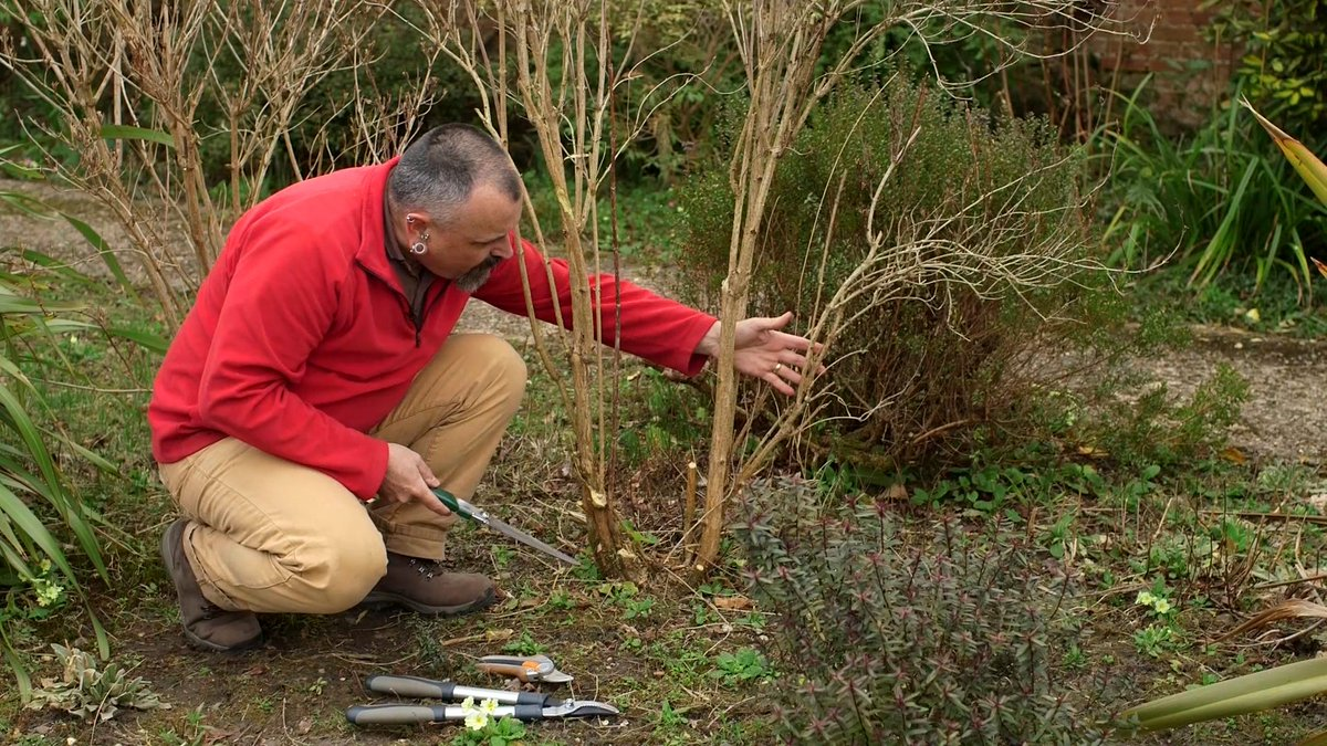 Gardeners World Mag On Twitter Davidhurrion Shows You How To