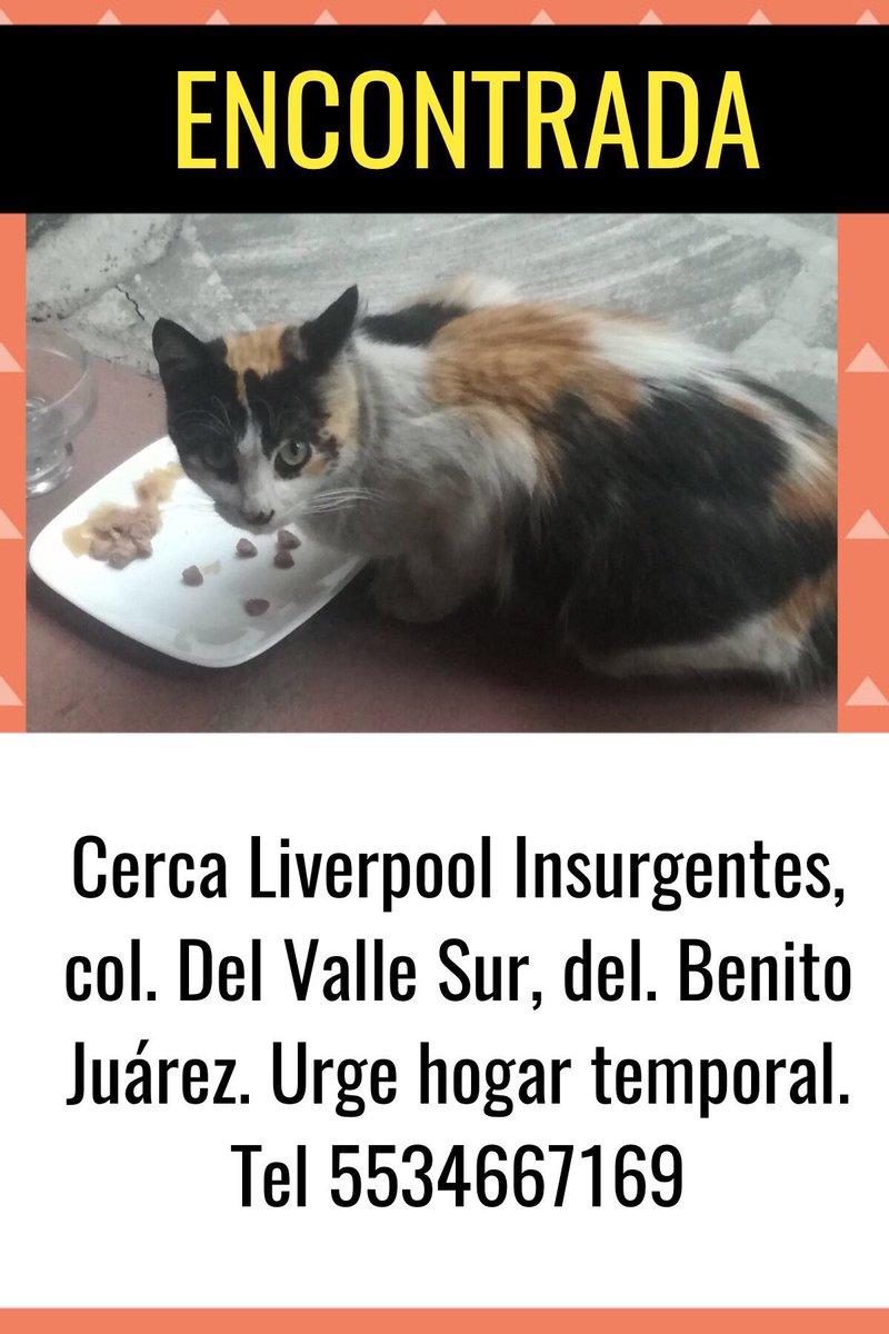 Esta gatita sigue en la calle, urge hoga...