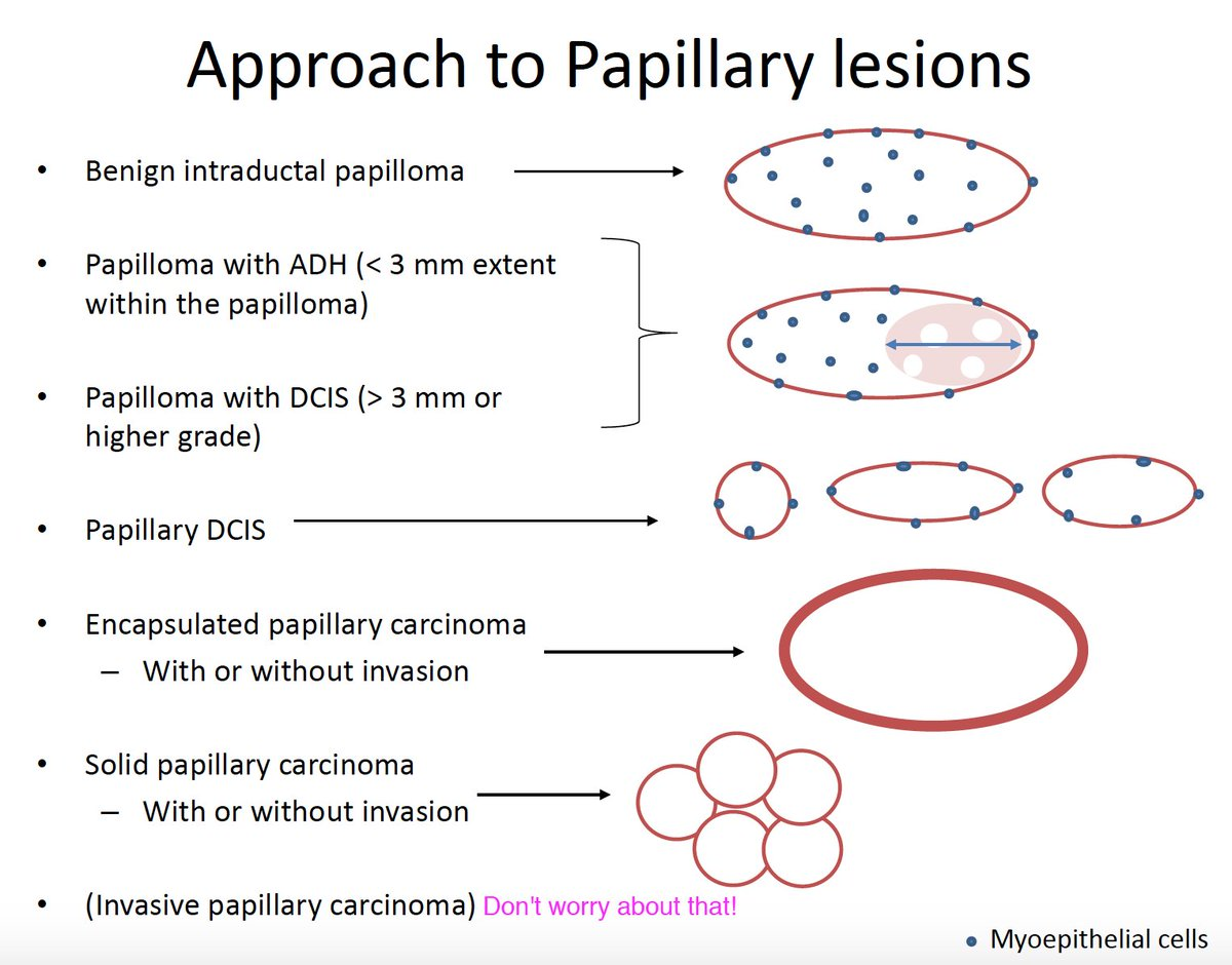 Apologise, papillary breast lesion
