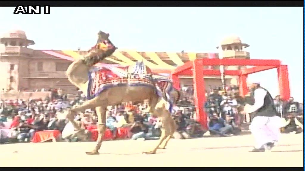 Two day International Camel Festival began in Bikaner #Rajasthan