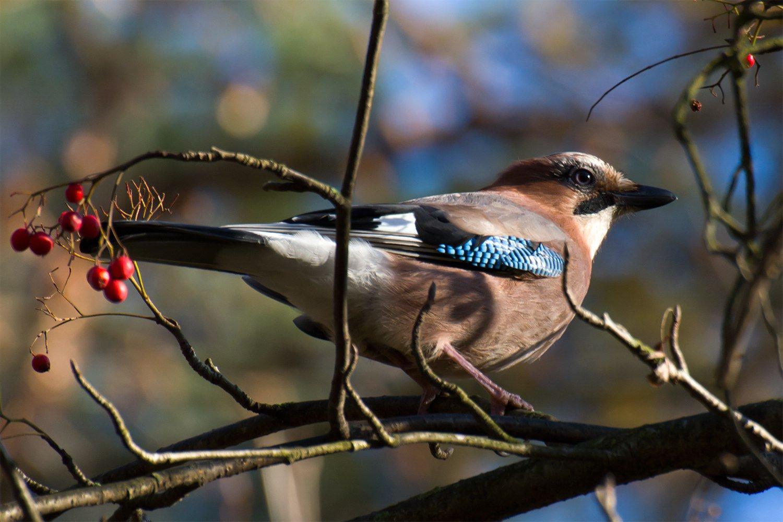 всего можно птицы спб фото с названиями многих мировых