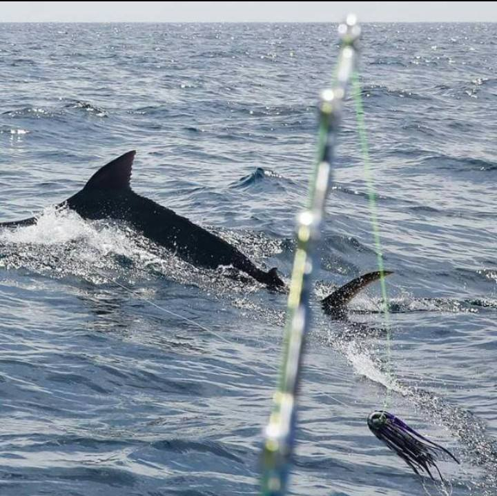 Salinas, Ecuador - Candy went 1-3 on Blue Marlin (500) and 0-2 on Striped Marlin.