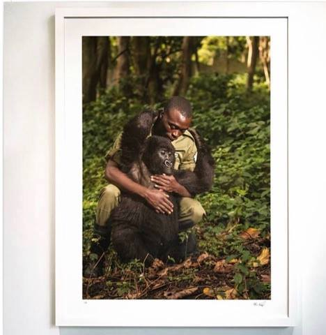 DRC Congo park ranger's selfie with gorillas goes viral