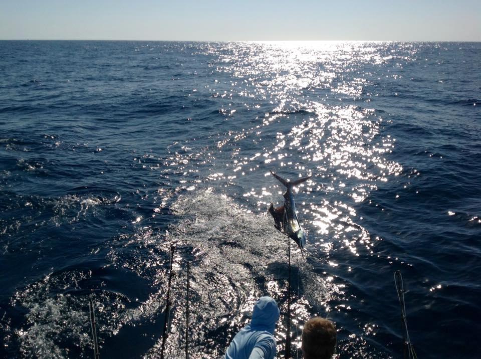 Guatemala - Captain Hook went 20-29 on Sailfish over 3-Days.