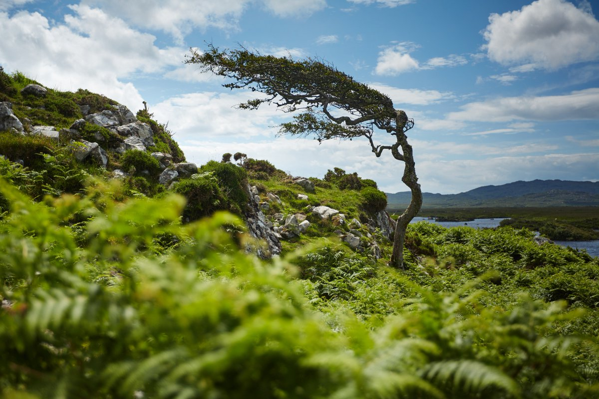RT @TurismoIrlanda: #BlueMonday  Trasforma il BlueMonday in #GreenMonday 💚  #magicairlanda #vacanzeinirlanda https://t.co/ItzWKR6kZc