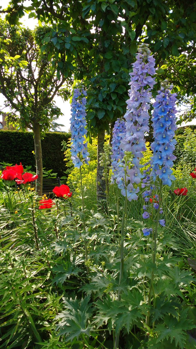Just in case #BlueMonday is getting you down here are some pictures of blue(ish!) flowers in our beautiful flower garden in June & July last year. Our gardens open to the public from 1st May to 31st July if you want to see their gorgeousness in person! @SurreyLife @GuildfordTIC