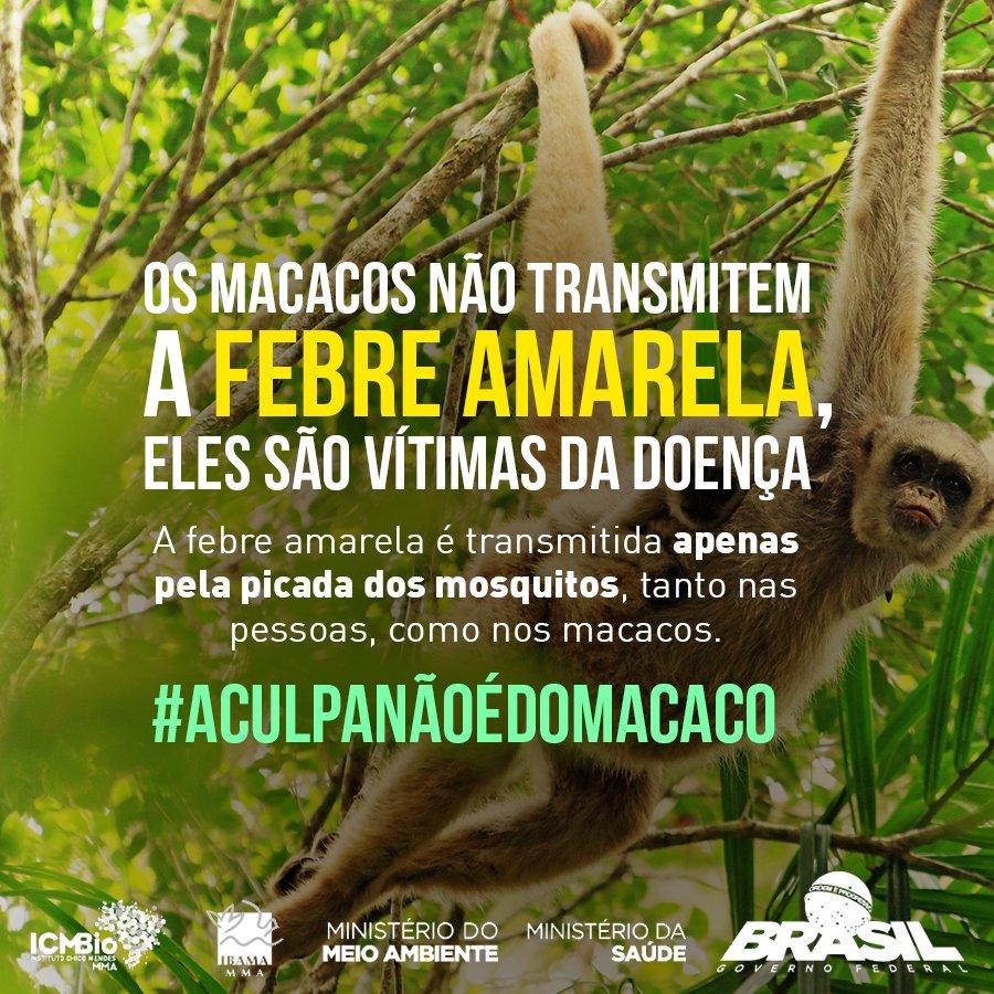 Você sabia? Os macacos são aliados da saúde no combate à #FebreAmarela. Esses animais têm papel fundamental na vigilância da doença. Quem é responsável pela transmissão de febre amarela em humanos é um mosquito. Entenda: https://t.co/3vT1YKCvxs