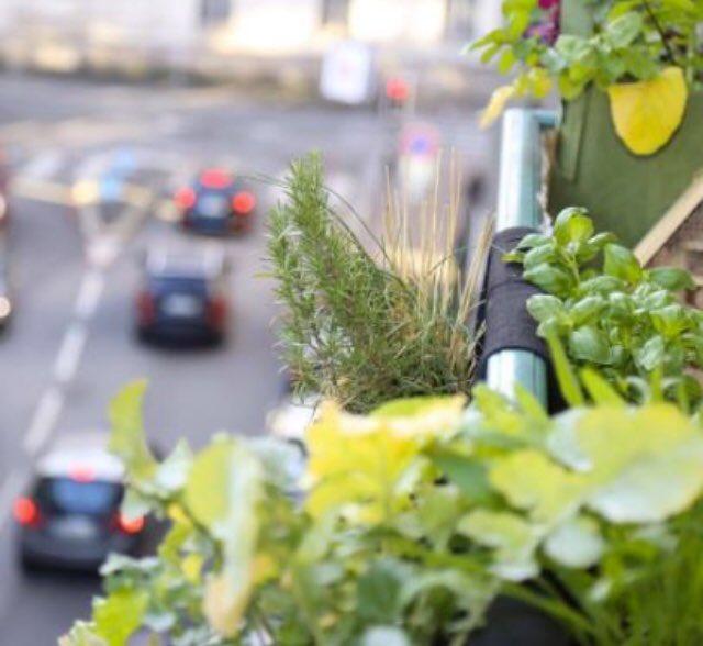 Envie d'avoir la main un peu plus verte ? L'entreprise lilloise @monpetitcoinver propose LA box de jardinage prête à l'emploi et éco-responsable, qui contient tout ce qu'il faut pour débuter son mini potager en ville 😉 #urban #responsable #social #lille #lifestyle