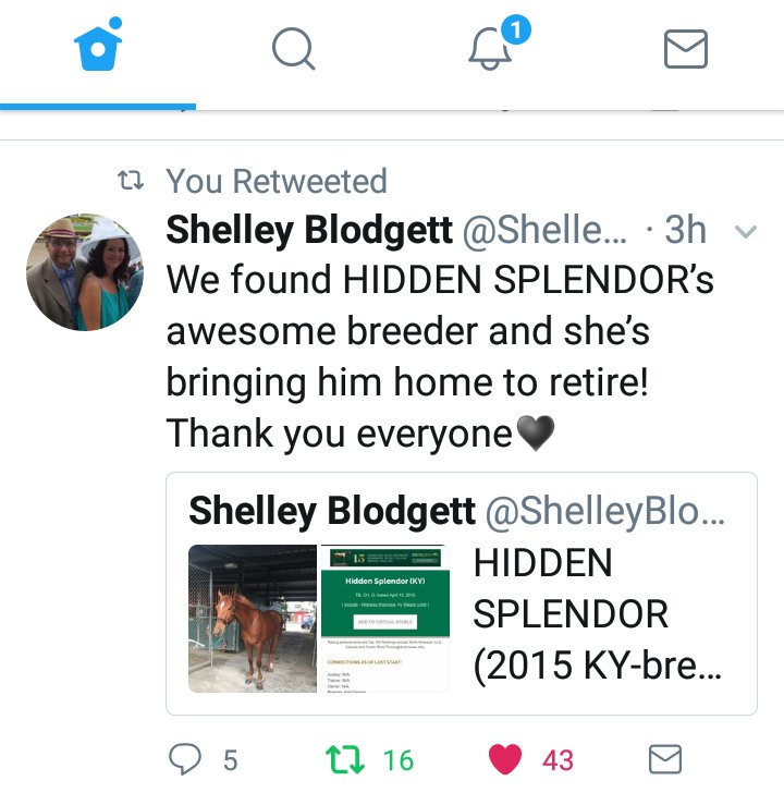 I'm so glad you've connected with his breeder.  @CaribbeanOTTB does great work. #HiddenSplendor indeed! That name says it all.  pic.twitter.com/6aUAzYo9wO