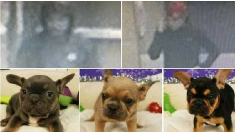 a0e576b0692 tempe police search for pair of bulldog bandits