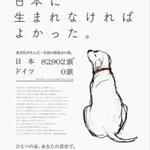 心が凍りついた画像… 日本に 生まれなければよかった。 次は絶対 動物愛護先進国に生まれて来るんだよ。。