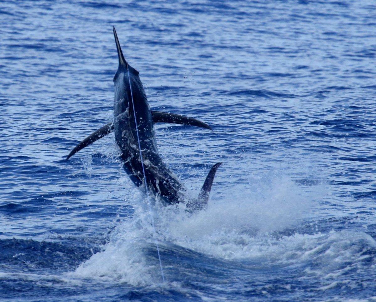 Exmouth, Aus - Peak Sportfishing went 3-4 on Blue Marlin.