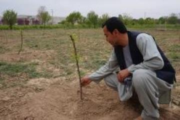 #Agriculture in #AFG: A rootstock nursery turns into a learning factory. See witness telling success story bit.ly/2AgqvI3 #AfghanGermanCooperation