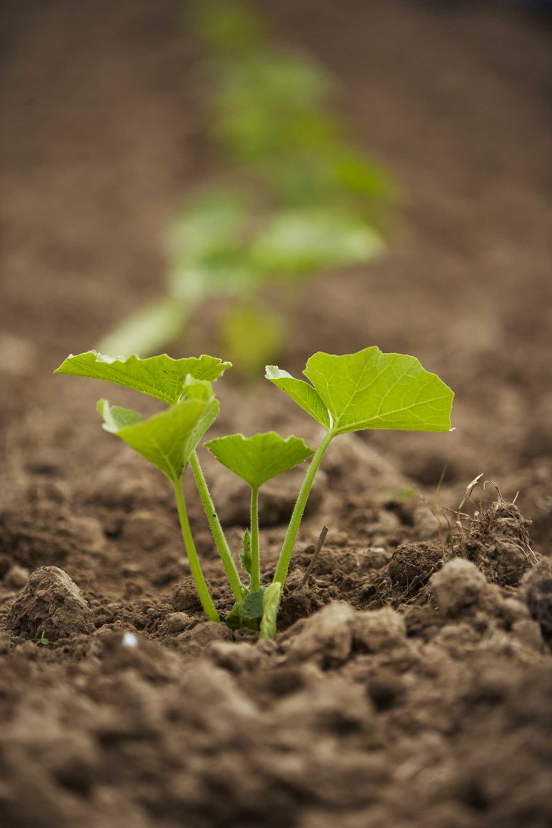 test Twitter Media - One goal of #biodynamics is the enlivening of the land. Only in vital soil can food grow harmoniously. Find out more https://t.co/miJg0YTJ5S https://t.co/aZ0tWPCoCB