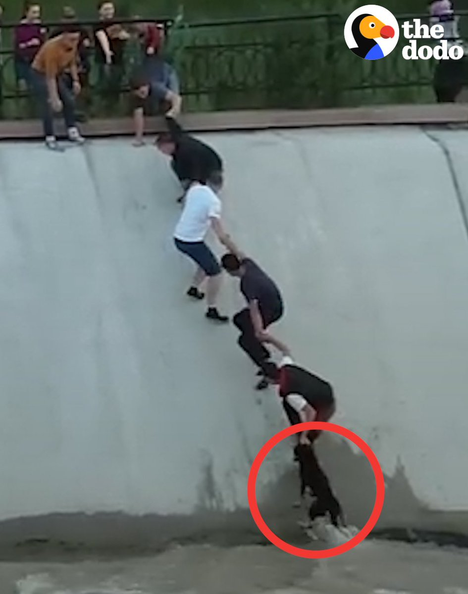These total strangers rallied together to rescue a stranded dog. Most intense human chain ever!