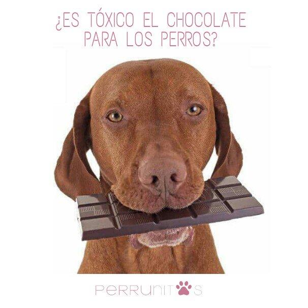 Perrunitos's photo on #FelizMartes