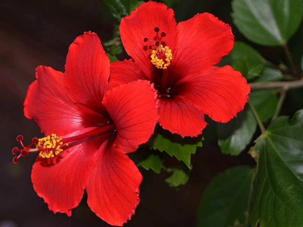 Asean on twitter answertoaseanquiz the national plant of do you know that hibiscus is also the name of a function room at the asean secretariat rooms at asec are named after flowers of asean izmirmasajfo
