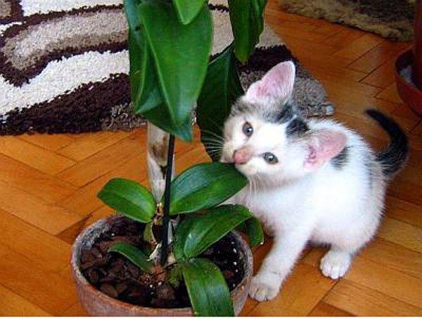 Большие картинки обои кошек онлайн каталог