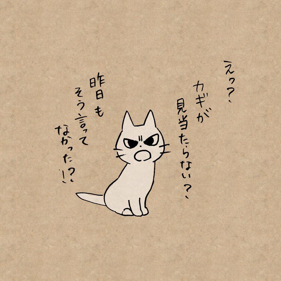 よくものを失くす人を叱ってくれる猫 https://t.co/NxFYRslvw...