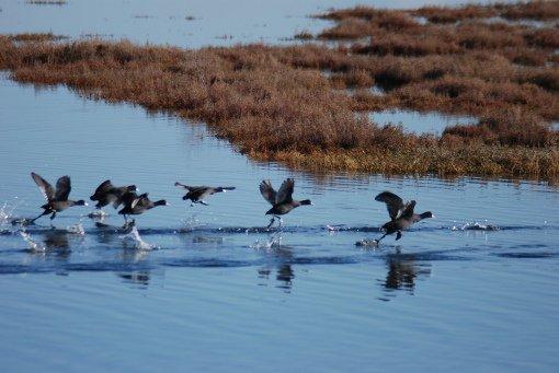 RT @VisitGreecegr: Bird watching by Lake Vistonida #Greece #VisitGreece #Travel #ttot  https://t.co/8syrassDeo https://t.co/nwUVVJ0DWN