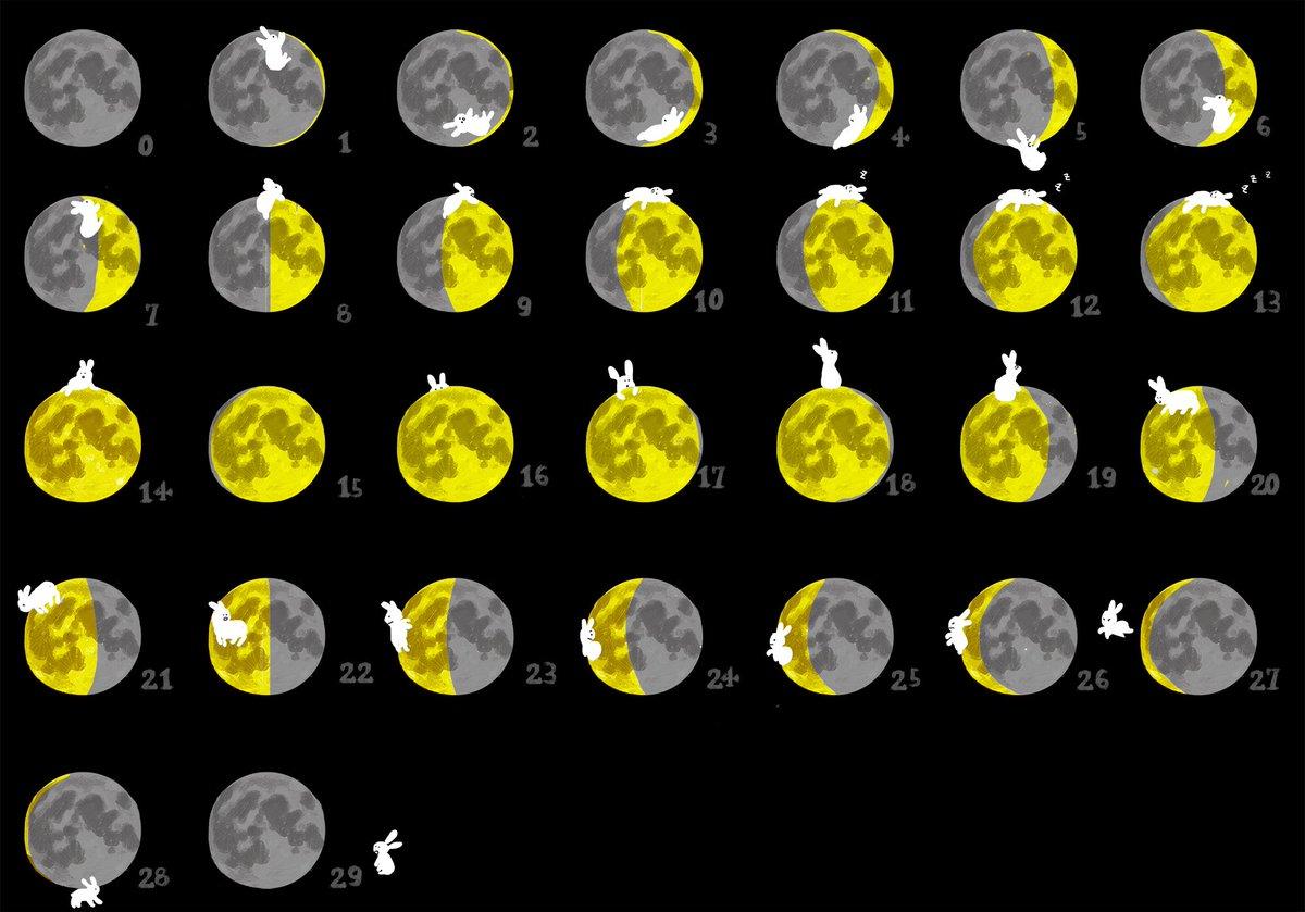 お月さまが大好きなうさぎ🐇🌕