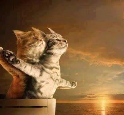 #TwittoDi gatti innamorati ❤️❤️🐱🐱 https:...