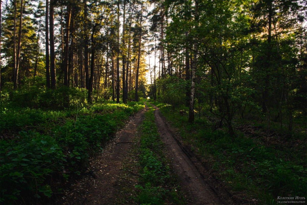 бесплатно лес самара картинки это