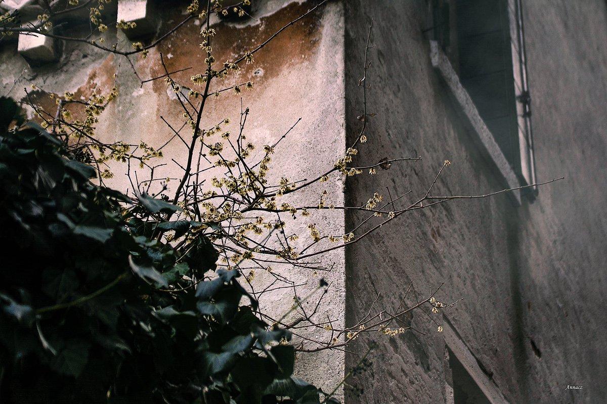 """Calicanto Fiore D Inverno anna on twitter: """"""""..il fiore del calicanto non colpisce per"""