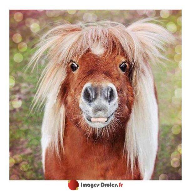 "Images-Droles.fr on Twitter: ""Drôle de cheval #animaux # ..."