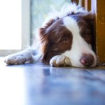 Feeding #Pets a Raw-Meat Diet Can Be Dangerous for Them—and for You via @TIME Magazine. Full story here: https://t.co/j8OowWEZAQ #ConsumerProtection #Dogs #DogFood