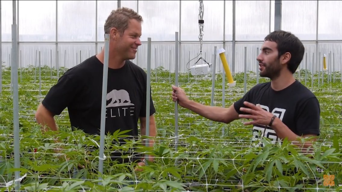 Watch @growersnetwork explore the large legal #cannabis greenhouses in California and how they effectively and efficiently cultivate the beloved plant:   https:// youtu.be/5jIcV1aasZQ  &nbsp;  <br>http://pic.twitter.com/j7z5rovIUC