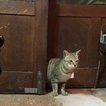閉店後。野良猫が古本屋に来店。 pic.twitter.com/Le4077RD1W