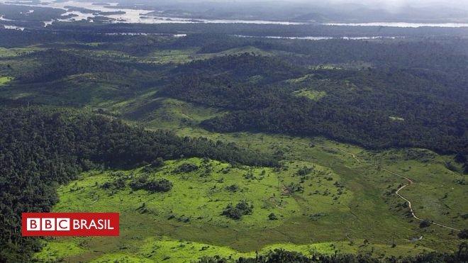 Projeto de lei na Europa pode incentivar desmatamento da Amazônia, dizem ambientalistas https://t.co/zMd3kKrKXs