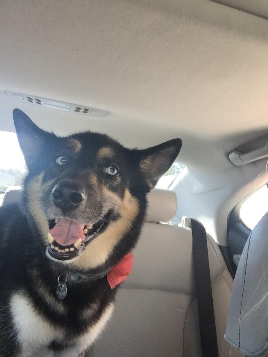 My doggo  #MakesMyWorldGoAround https://...