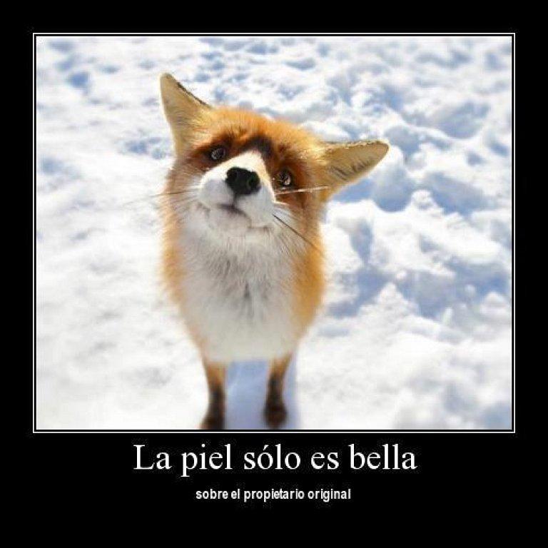 #YoNoDisparo #NoAlMaltratoAnimal  #noala...