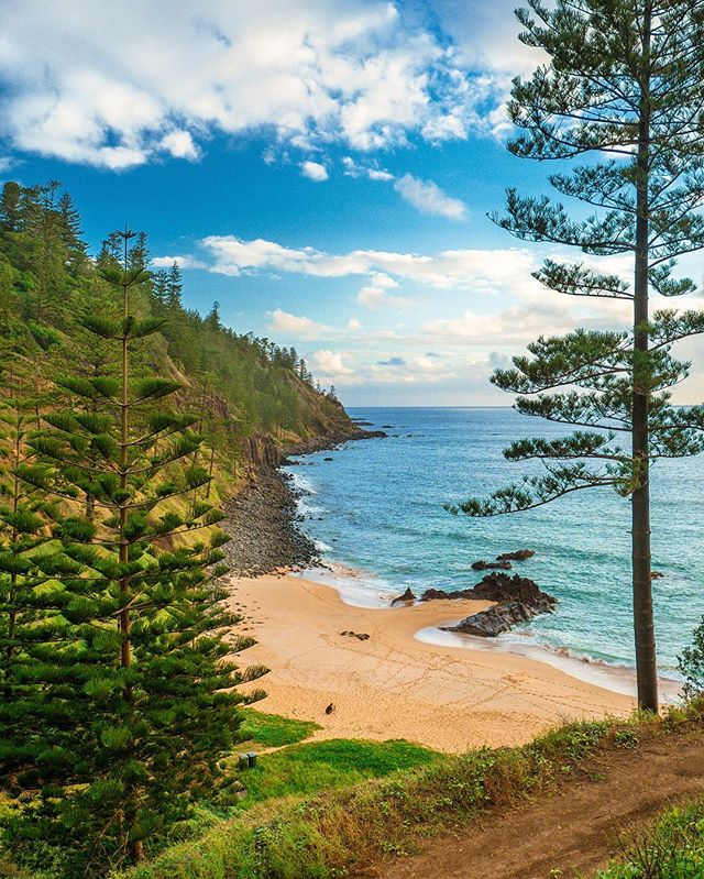 Norfolk island norfolkisland twitter 1 reply 1 retweet 8 likes sciox Gallery