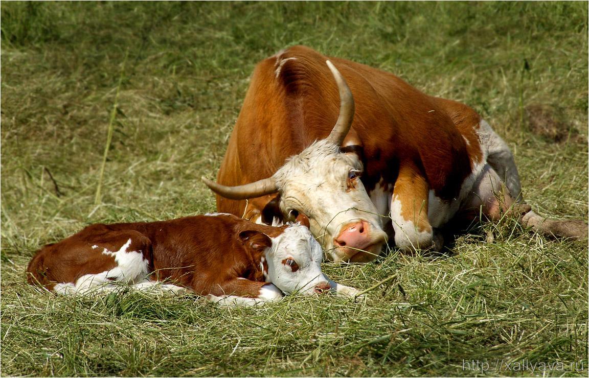 врата фото домашних животных с их детенышами рисунок