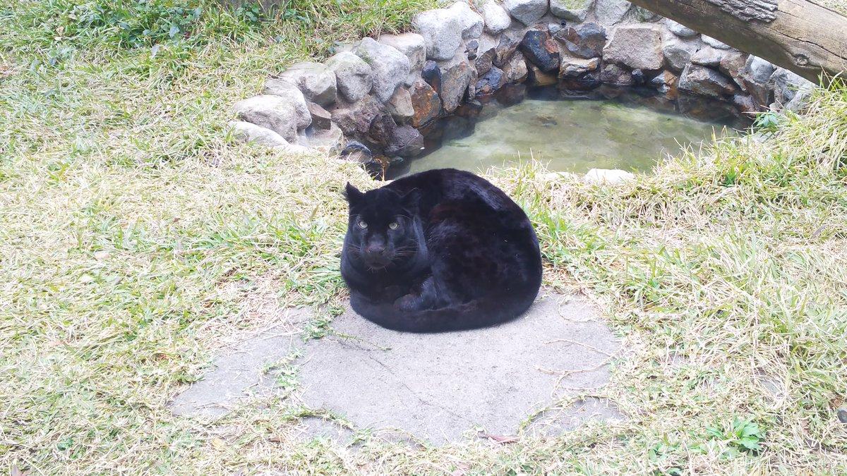 クロヒョウも丸くなる?!まるで猫のようなヒーターの上の姿www