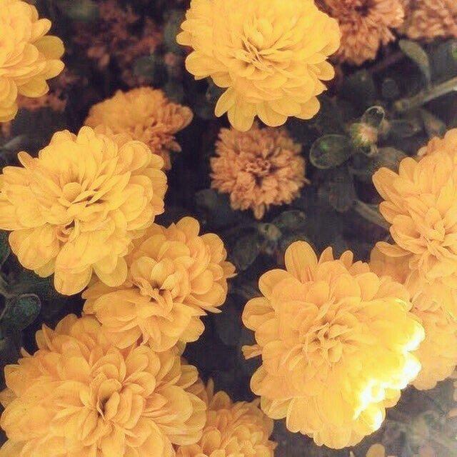 Exo Aesthetic On Twitter A Field Of Flowers Xiumin BestFanArmy IHeartAwards EXOL WeareoneEXO
