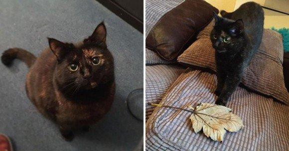 カラパイア : ネズミとかそういうの嫌いっぽかったんで...小動物の代わりに落ち葉を拾い集めて毎朝飼い主に届ける猫 https://t.co/jpS6wpnQD2