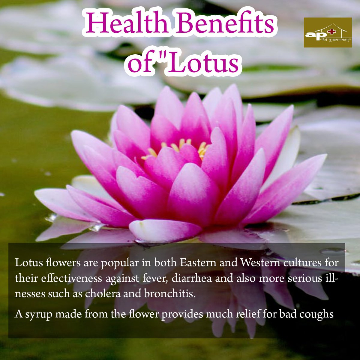 Draarti parimal on twitter health benefits of lotus httpst draarti parimal on twitter health benefits of lotus httpstuak4wqogxw healthbenefitsoflotus lotus healthbenefits bronchitis syrup flowers izmirmasajfo