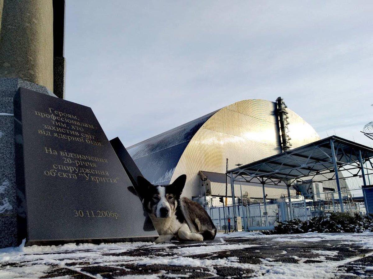 Чернобыль собака фото