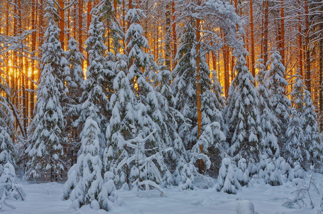 зимние фотографии русских лесов всех