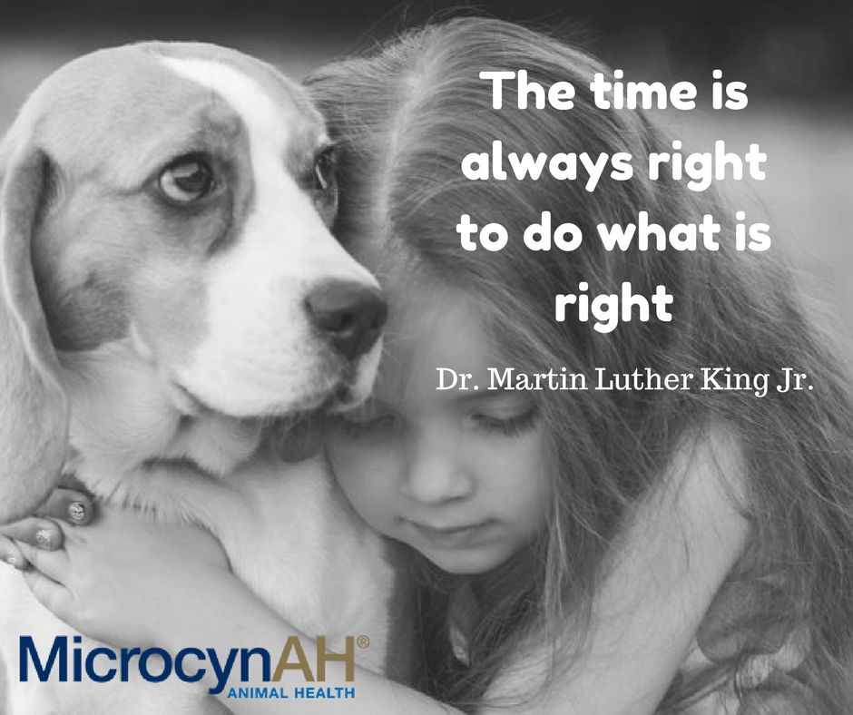 A great quote from Dr. Martin Luther Kin...