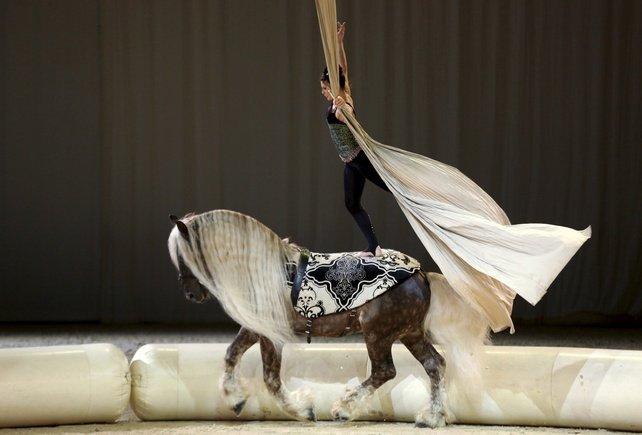 avignon salon cheval passion les voltigeurs questres reviendront cet t. Black Bedroom Furniture Sets. Home Design Ideas