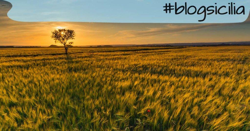 """""""Chiunque attraversi il nostro cammino ha un messaggio per noi"""". J. Redfield  Buonasera da #blogsicilia"""