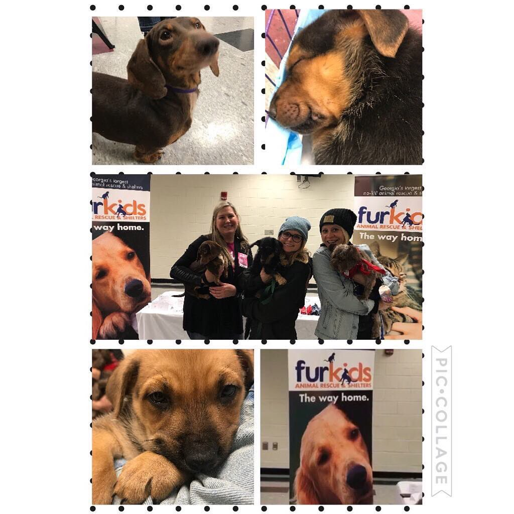 Hey Atlanta. We're here and some special friends came backstage to visit us! Y'all go see the sweet folks @furkidsinc! Some great Pups up for adoption! See y'all tonight!!