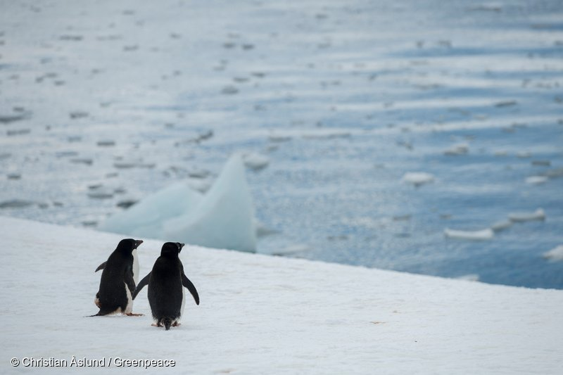 It's simple — let's hold hands, work together, and create the largest protected area on Earth. Here's how >>  https://t.co/LZmmbxs8Sn#ProtectAntarctic