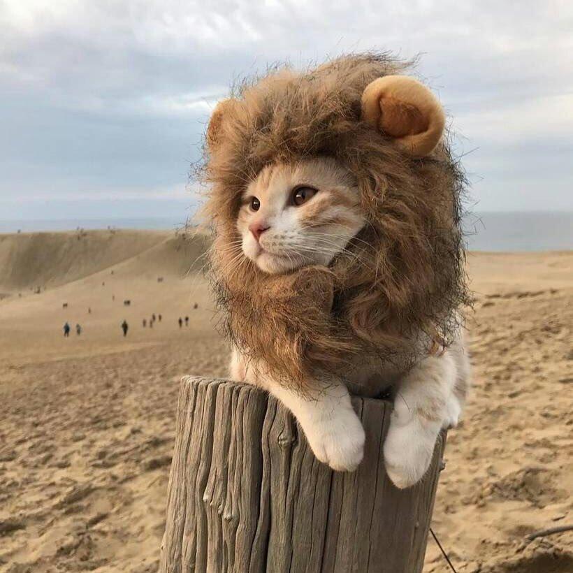 Картинки, картинки прикольных львят