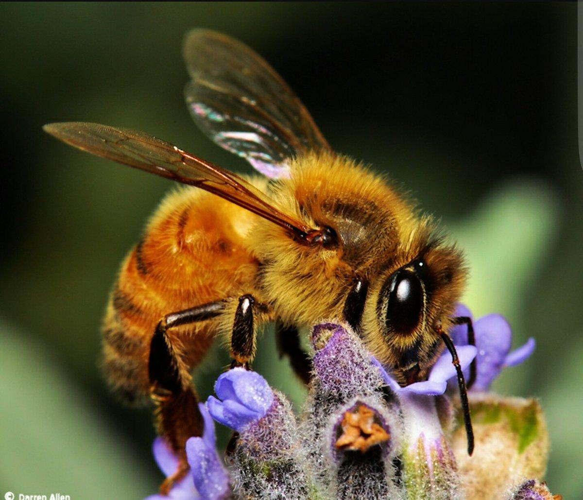 жизнь пчелы картинки штрафа скорость тоже